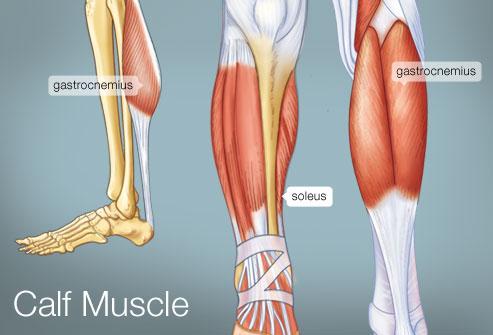 493x335_calf_muscle.jpg